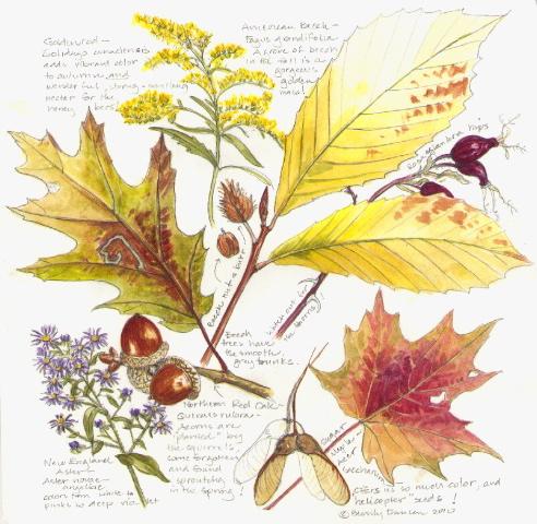 Drawing Nature | SFN Botanical Art: The Blog