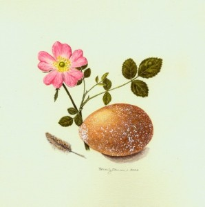 Beverly Duncan Ashfield Composition-Early Summer (Rosa Eglanteria, Barred Rock Egg & Feather), 2002 7 x 7 inches $700