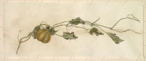 Carol Woodin Volunteer Squash watercolor on vellum attached with linen string 11 x 27.5, $5,800