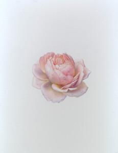 KKTamora Rose 300dpi for Susan